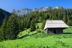 High Mountain Meadow Scenery Royalty Free Stock Image