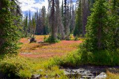 High Mountain Meadow and Stream. This high mountain meadow and stream in the High Uintas can be seen from the Crystal Lake Trailhead hike Stock Images