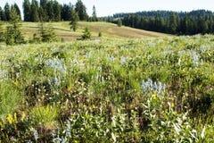 High mountain meadow, Wallowa - Whitman mountains, Oregon Stock Photography