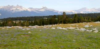 High mountain Meadow Royalty Free Stock Photo
