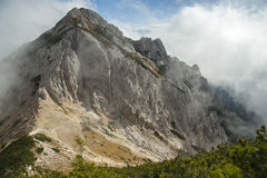 High mountain in the mist and clouds. Pine trees in the foreground Royalty Free Stock Photography