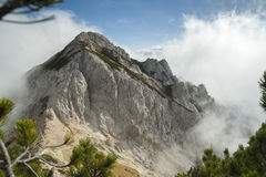 High mountain in the mist and clouds. Pine trees in the foreground Stock Photography
