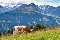 High mountain pasture Royalty Free Stock Images