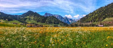 High mountain pastures of Swiss Stock Photography