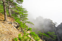 High mountain with pine in clouds Royalty Free Stock Images