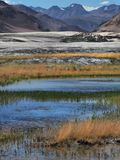 The high-mountain river: the water of blue tsevta flows among the yellow grass, in the background the salty desert and the mountai. High mountain river: the Royalty Free Stock Photography