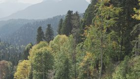 High mountain slope covered with golden autumn forest stock video