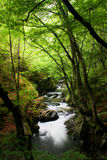 High mountain stream in forest. High mountain landscape of stream in forest Stock Photos