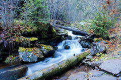 High mountain stream in forest Royalty Free Stock Images