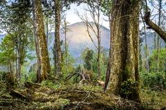 Mountain at tree frame stock photos