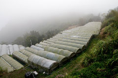 High mountain teaand vegetable farm stock images