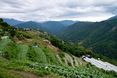High mountain teaand vegetable farm royalty free stock photo