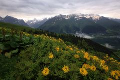 High-mountain valley with a flowering meadow against the backdrop of snow-capped peaks near the village of Mestia royalty free stock photography