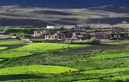 High mountain village on a background of gray hills, in front of the white houses of peasants spread fields of wheat bright green. In the sun, Tibet Royalty Free Stock Images