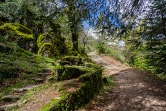 High mountain woods in a spring morning in the national park of Peneda Geres in the north of Portugal.  royalty free stock photo