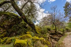High mountain woods in a spring morning in the national park of Peneda Geres in the north of Portugal.  stock photo