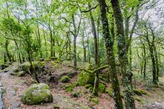 High mountain woods in a spring morning in the national park of Peneda Geres in the north of Portugal.  royalty free stock photography
