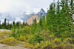 High mountains and alpine forest of the Canadian Rockies along the Icefields Parkway between Banff and Jasper. In the fall royalty free stock image