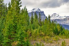 High mountains and alpine forest of the Canadian Rockies along the Icefields Parkway between Banff and Jasper. In the fall stock images