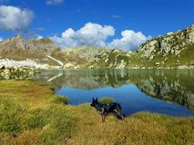 High Mountains, Bergsee, Mirroring Stock Photo