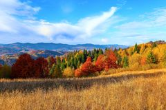 At the high mountains with dense forest there are nice orange coloured trees on the big lawn. Stock Photos