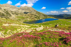 High mountains,pink rhododendrons and glacier lake,Retezat mountains,Romania,Europe Stock Photo