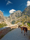 High mountains in Spain Stock Photography