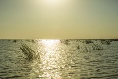 High Noon on Danube Delta Waters stock photography