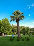 High palm tree in the city park Royalty Free Stock Photography