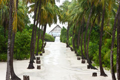 High palm tree at the road side. In maldives island resort stock image