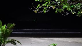 High palm trees against the background of the night sky, stormy weather in an exotic resort. waves.  stock video footage