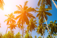 High palm trees against a blue sky Stock Photography