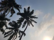 High palm trees. High palms stretch into the sky Stock Photo