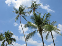 High palm trees on wind Royalty Free Stock Images