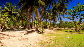 High Palms against Tropical Plants in Fairy Stream Park. Panorama of high palms and tropical plants in fairy stream park against blue sky stock video footage