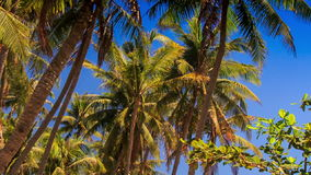 High Palms against Tropical Plants in Fairy Stream Park. Panorama of high palms and tropical plants in fairy stream park against blue sky stock footage