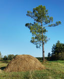 High pine tree and haystack in a forest Stock Image