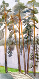 High pines on the bank of lake. Belarus Royalty Free Stock Photo