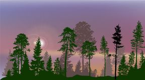 High pines in fir trees forest on lilac sky background. Illustration with high pines in fir trees forest on lilac sky background Royalty Free Stock Photo