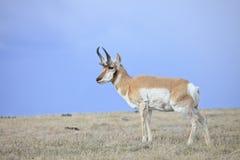 High plains drifter Stock Photography