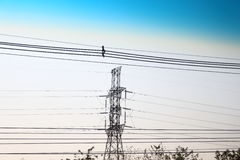 High-power transmission towers and white skies. stock photo