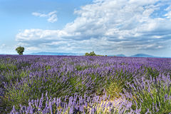 High Provence, france Stock Photography