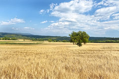 High Provence, france Stock Photos