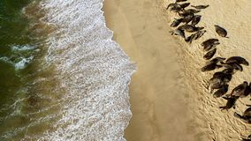 Atlantic ocean shore with seals in Namibia, Africa royalty free stock photography