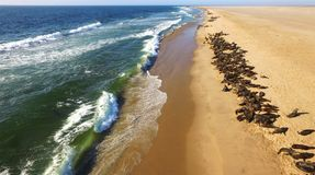 Atlantic ocean shore with seals in Namibia, Africa. High quality aerial drone photo of desert sand peninsula, ocean shore and seals on beach near Walvis Bay stock photos