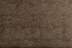 Free High Quality Animal Reptile Skin Patten And Textur Royalty Free Stock Images - 15944539