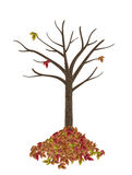 High quality autumnal tree Royalty Free Stock Photography