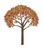 High quality autumnal tree Royalty Free Stock Image