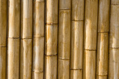 High quality bamboo texture. Bamboo cane texture with the solar light Stock Photo