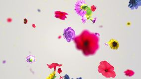 Colorful big flowers background in 4K stock video footage